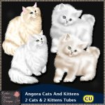 Angora Cats And Kittens CU