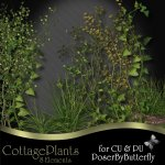 CU Cottage Plants