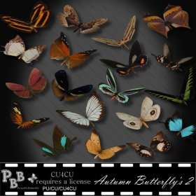 Autumn Butterfly's 2